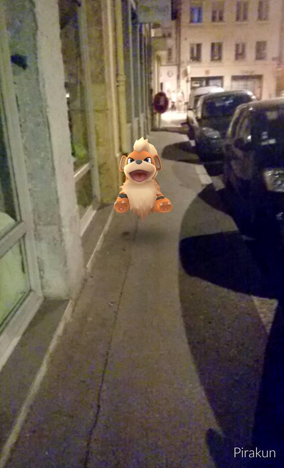 un gentil caninos dans la rue