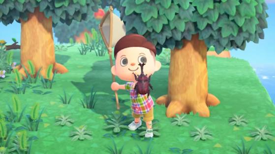 Animal Crossing New Horizons : les insectes les plus rares et chers du jeu !