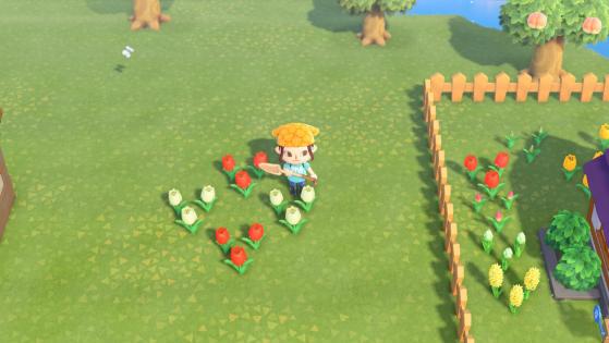 Exemple pollinisation croisé - Animal Crossing New Horizons