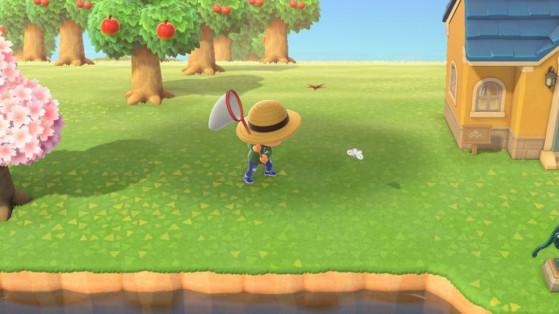 Animal Crossing New Horizons : la liste des insectes du mois d'août de l'hémisphère nord et sud