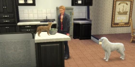Test Les Sims 4 Chiens et Chats, PC, Mac