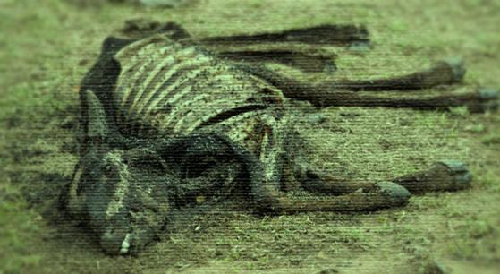 Image de la vidéo de Tide - Star Citizen