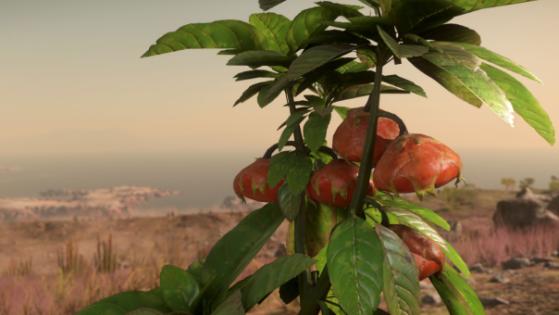 Les pitambus poussent par petites grappes sur les tiges florales - Star Citizen
