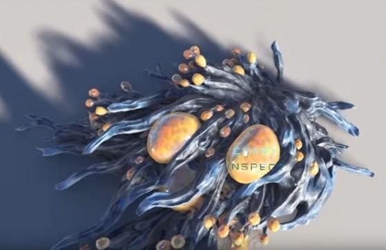 Macro-algue que l'on trouve sur les côtes de Hurston et récoltable grâce à l'interface d'intéraction