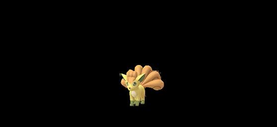 (disponible état sauvage et oeufs) - Pokemon GO