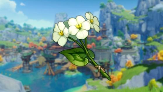 Genshin Impact : fleur de Qingxin, emplacements, où le trouver