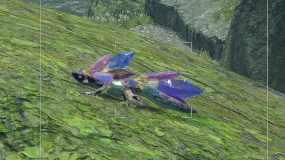 Lézard Monster Hunter Rise, quête photo : Où les trouver ? Notre guide