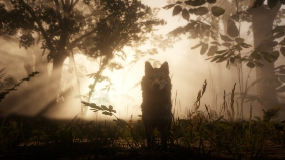 Guide Red Dead Redemption 2 : Loup-garou, werewolf, secret, easter egg