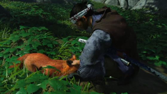 Soluce Ghost of Tsushima : Position des terriers de renard & sanctuaires d'Inari