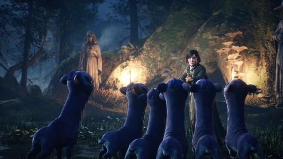 Le joueur pourra les apprivoiser - Harry Potter Hogwarts Legacy